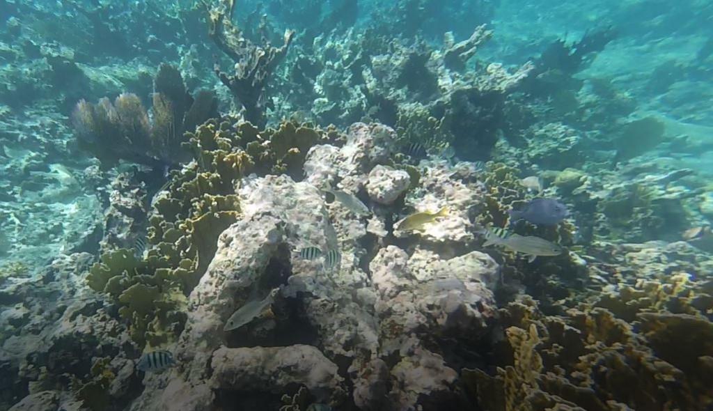 Bunte Fischwelt des Riffs vor Goffs Caye, AIDA Karibik - Belize - Ausflug