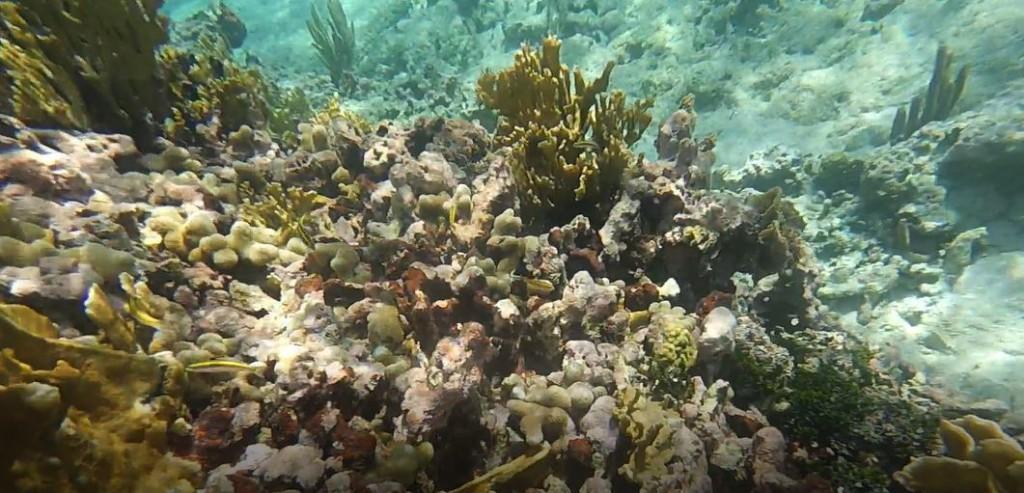 Unterwasserwelt des Riffs vor Goffs Caye, AIDA Karibik - Belize - Ausflug