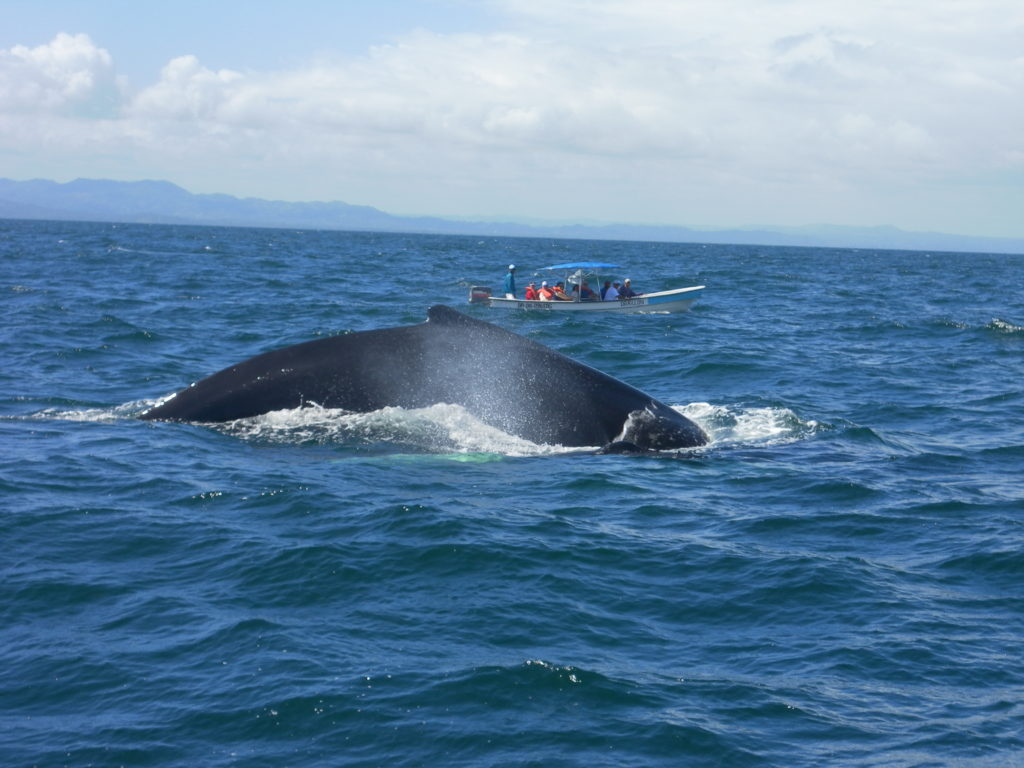 AIDA Karibik – Samana – Ausflug Wale und Cayo Levantado